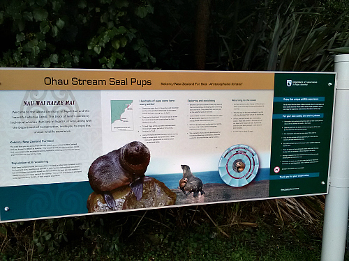 The entrance to the Ohau Stream seal pups