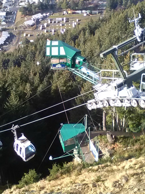 The Ledge Bungy and swing at Bob's Peak