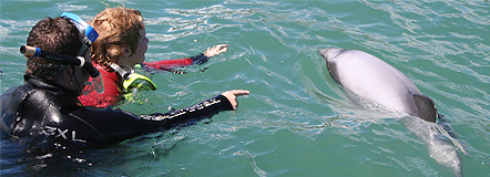 swimming with the dolphins is an awesome experience