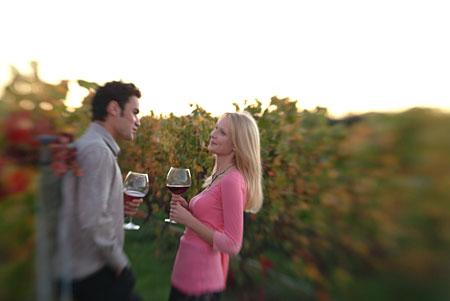 Classic New Zealand Wine Trail Pinot Vines Wairarapa