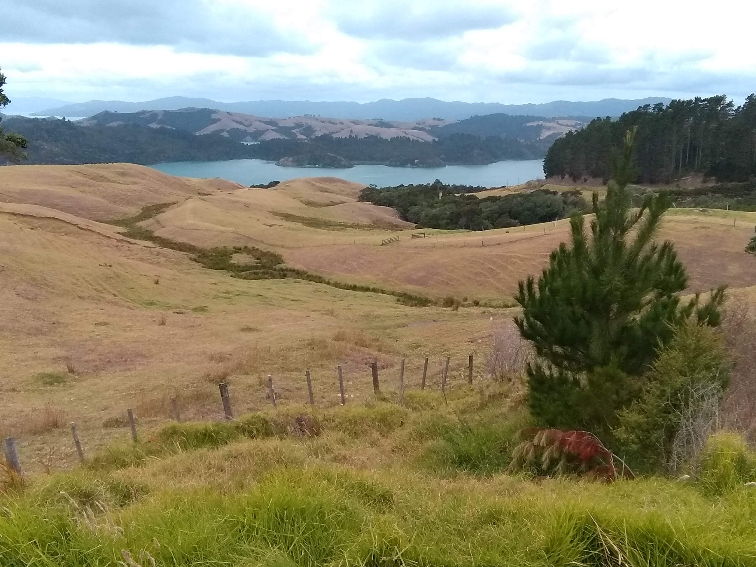 View from the lookout between Coromandel and Whitianga