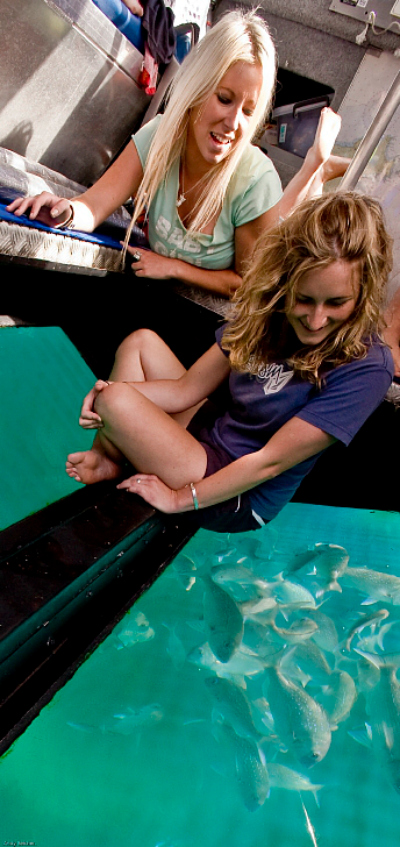 The Coromandel New Zealand - Viewing snapper in a glass bottom boat - picture courtesy Tourism Coromandel