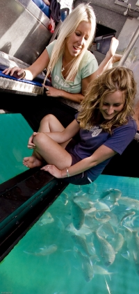 Viewing snapper in a glass bottom boat - picture courtesy Tourism Coromandel