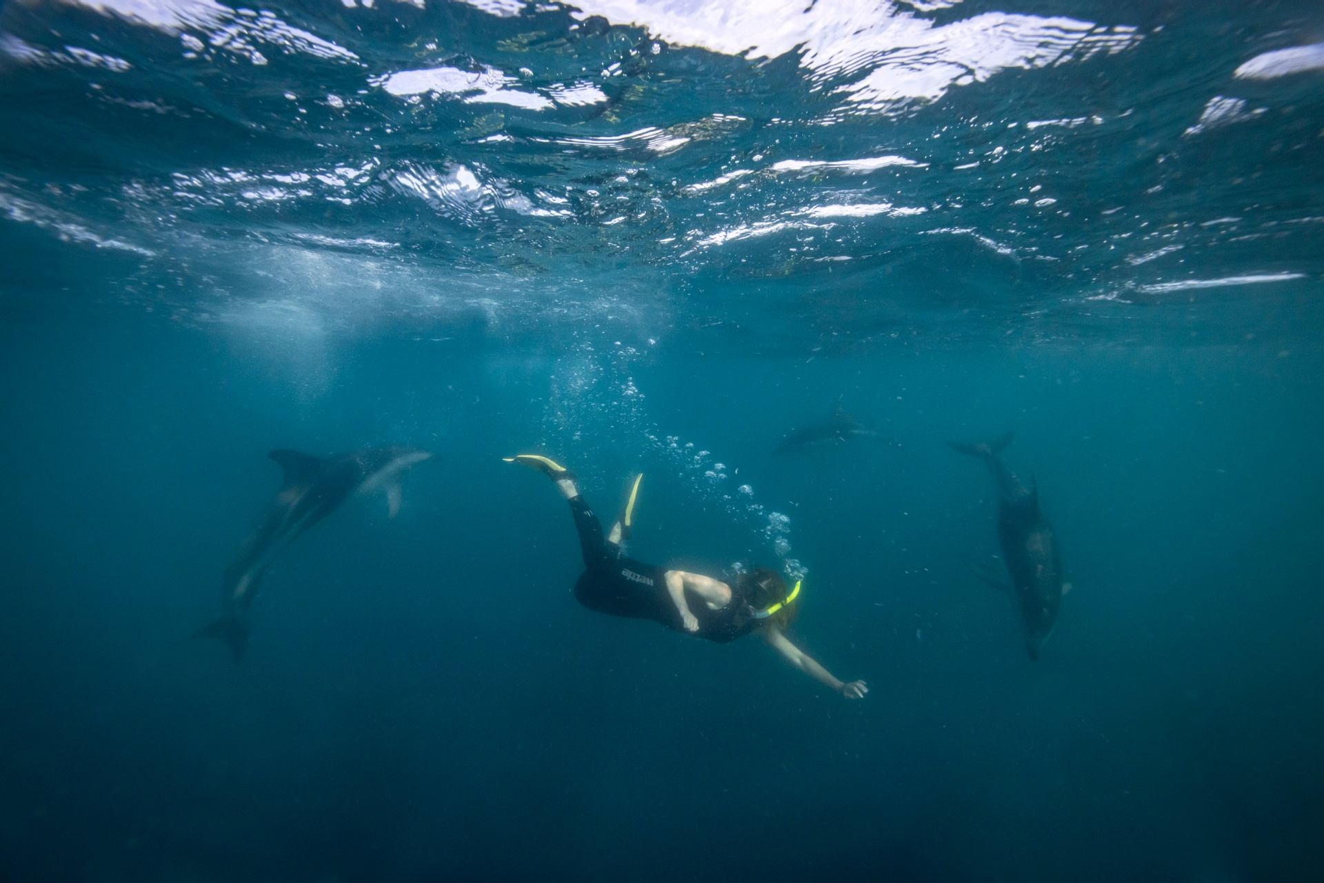 Swimming with the dolphins off Kaikoura. Image courtesy Miles Holden.