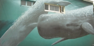 Mural of Giant Sperm Whales in Kaikoura