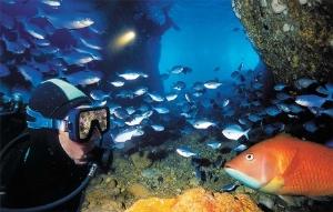Northland - Diving in the Poor Knights Marine Reserve Courtesy northlandnz.com