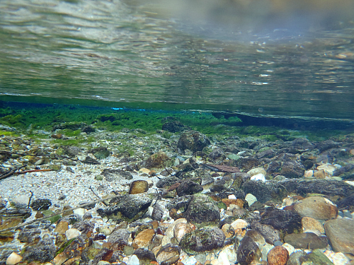 The crystal clear waters of Pu Pu Springs