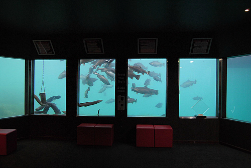 Come below the surface at Queenstown Underwater Observatory - image courtesy Queenstown Underwater Observatory