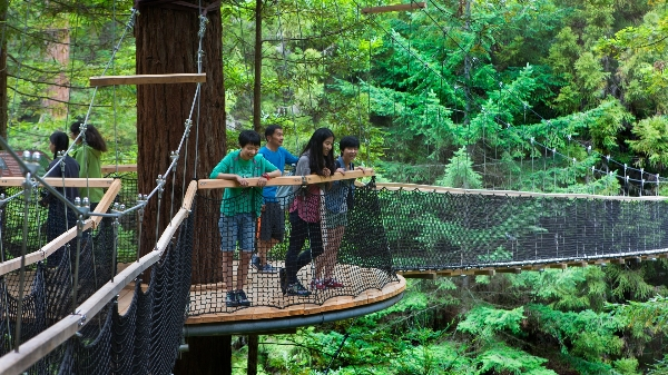 Redwoods Forest Treewalk - pic courtesy Tourism Media