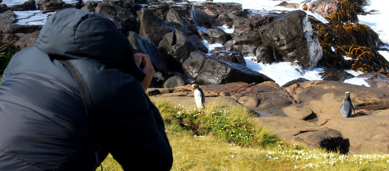 Penguins at Curio Bay in Southland. Image courtesy Great South.