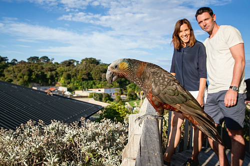 Stewart Island is home to many native birds including the Kaka - pic courtesy Miles Holden