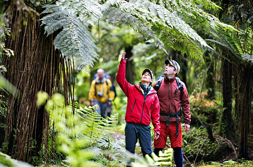 Come and experience the amazing Hollyford Track on this 3 day guided walk.
