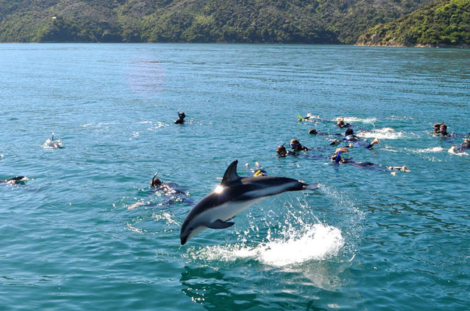 Swimming with dolphins in the Marlborough Sounds - it's good for the soul!