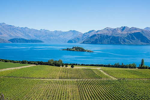 Rippon Vinyard - image by WanakaNZ