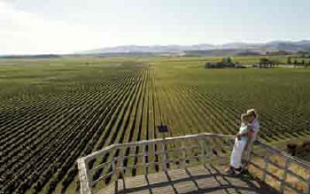 The Marlborough district is home to dozens of wineries