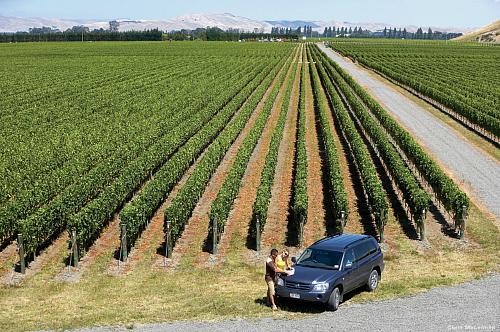 Gimblett Gravels vinyard at Hawkes Bay - pic courtesy Chris McLennan