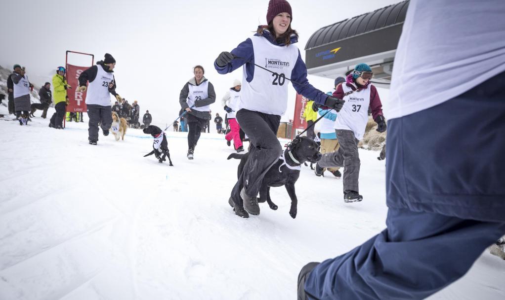 Queenstown Winter Festival Monteith's Dog Derby