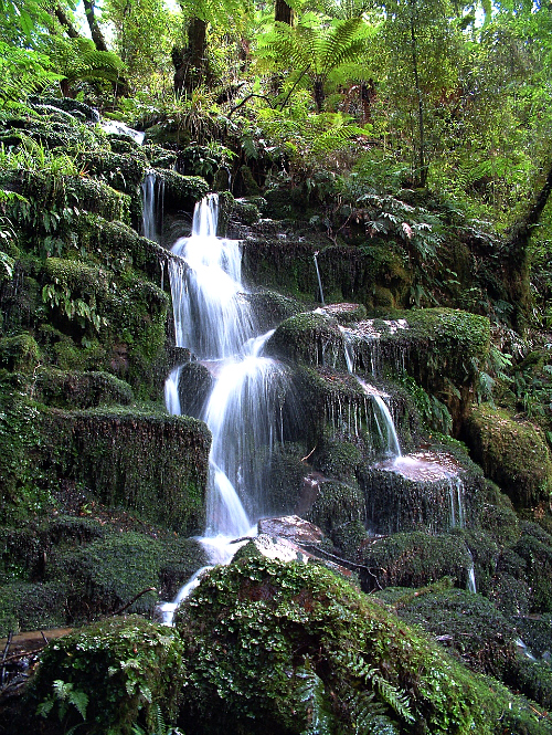 Cascading falls at Whirinaki Forest Park - image courtesy Whirinaki Rainforest Experiences