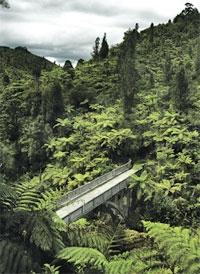 Whanganui River Road Courtesy wanganui.com